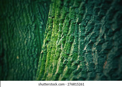 tree bark texture with green moss