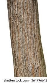 Tree bark texture isolated on white, oak wood background