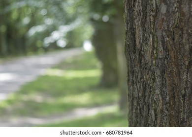 Tree Bark with Trees in Background and Blurred