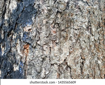 Tree bark. View of the tree trunk and the bark of an old tree. Abstraction, background, textured pattern of bark on the trunk of a large and old tree in the rainforest. Graphics texture decorations