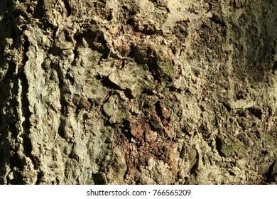 Tree bark. Wood moss. Abstract background. Macro.