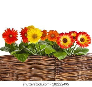 tree bars fence for garden flowers isolated on white background