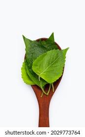 Tree Basil leaves (Ocimum gratissimum) in wooden sppon on white background.
