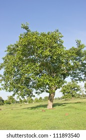 tree , be fertility symbol suits the forest of every the area , which place has many place that trees , will become tourist way ecology attraction , which , as a result , there is many on this world