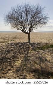 tree in the beach