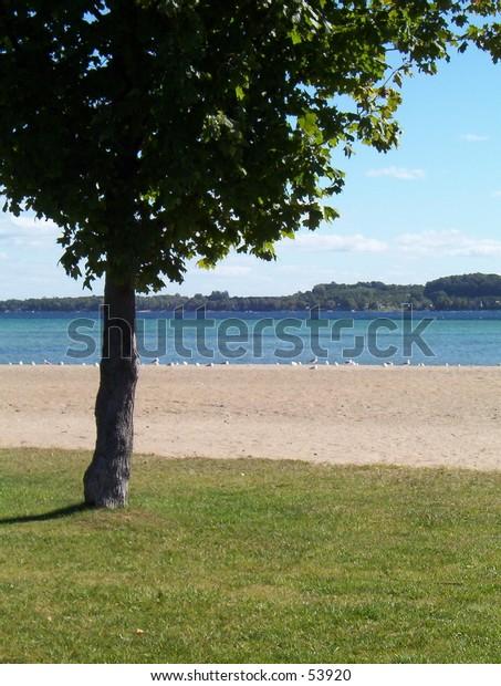 Tree and Beach Scene on Lake Michigan