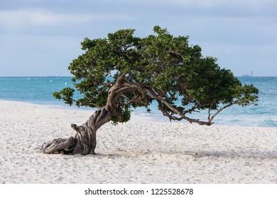 tree beach tropical