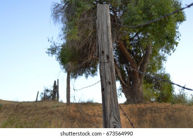 A tree and beat up fence on a hillside in Southern California.
