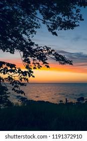 Tree with beautiful sunset