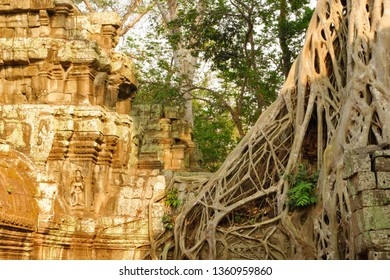 Tree became like a wite net and wrapping ruins at Ta Prohm. Ta Prohm, the temple at Angkor, Siem Reap, Cambodia.The photogenic place because trees are growing out of the ruins.