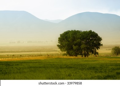 Tree behind a farm in rural Utah
