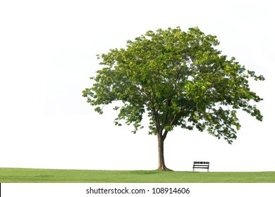 Tree with  bench and green grass isolated on the white backgrounds