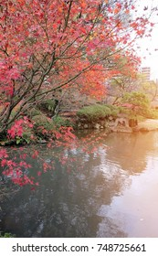 A tree beside a pond in a park in autumn. In Japan, with the sunshine in the morning.