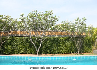 tree beside the pool