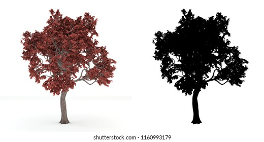 A tree and black alpha mask isolated on white background