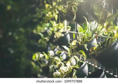 Tree in black pot sunlight background