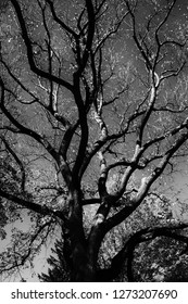 Tree. Black and white colors