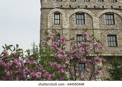 Tree in bloom an castle in Bosnia