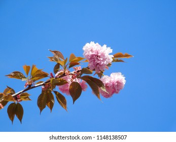 Tree Blossoms on a Bright Day