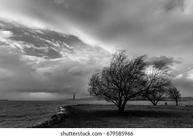 A tree blown by the wind at the lake, with some waves breaking on the shore. The sky is overcast, but there are some holes through the clouds.