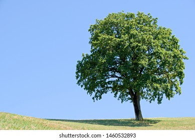 Tree with blue sky as background