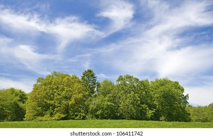 Tree, with blue sky. Green field.