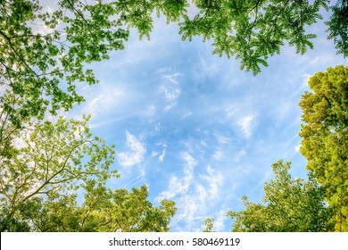 Tree, blue sky and white cloud