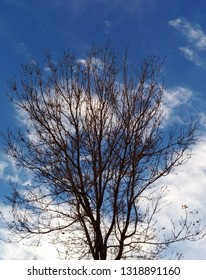 Tree with blue sky and white cluds