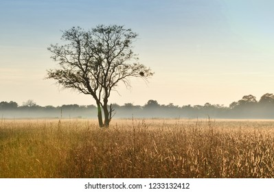 TRee in Botswana