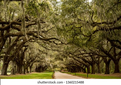 Tree boulevard in the Boone Hill plantation in Charleston SC - USA