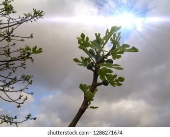tree branch background cloudy sky and sun