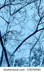 Tree Branch in Blue filter.