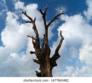 Tree branch and blue sky background