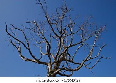 Tree branch, blue sky background