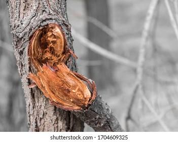 Tree branch broken off of a tree trunk