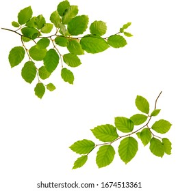 Tree branch with green leaves isolated on white background. - Shutterstock ID 1674513361