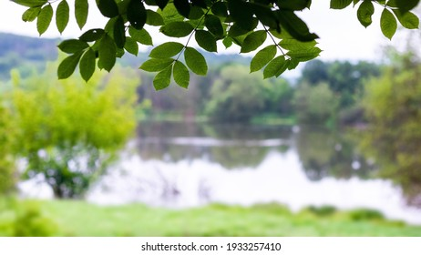 Tree branch with green leaves near the river in summer