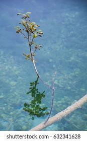 tree branch growing from underwater tree