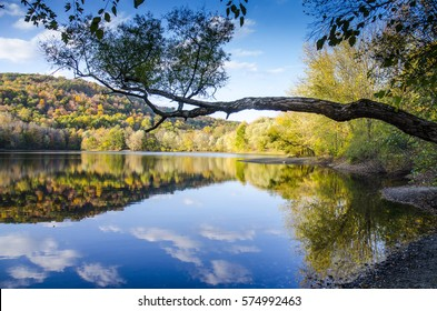 Tree branch hanging over the lake. Ramapo Valley County Reservation. Mahwah, New Jersey