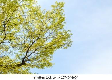 Tree branch leaf on blue sky background