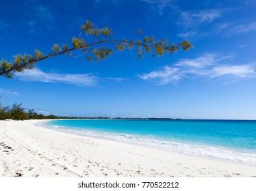 The tree branch leaning over the empty beach on uninhabited island Half Moon Cay (Bahamas).