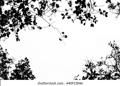 Tree branch and leaves silhouette against white background.