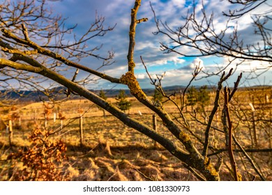 tree branch with lichen with cloudly blue sky