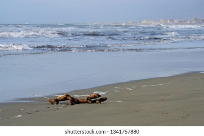 tree branch lying on the beach of Versilia coastline, on wintertime