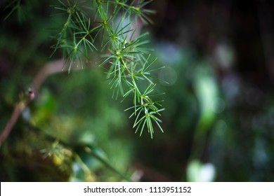 Tree branch on blurred background in Croatia