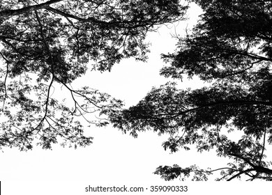 Tree branch silhouette against white background.