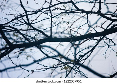 Tree branch silhouette against a winter sky