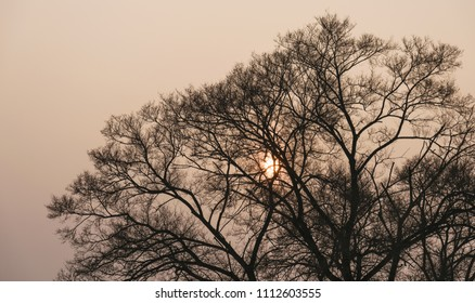 Tree branch silhouette over sky with sun. Color toned image.