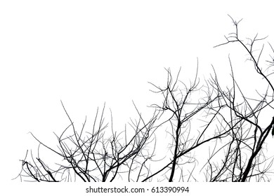 tree branch silhouette photography , isolated white background
