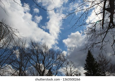 Tree branch silhouettes surrounding deep blue sky land large white billowy clouds
